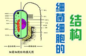 细菌细胞的结构